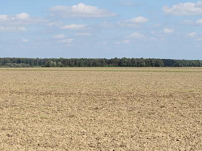 поле, пейзаж, орни, природата