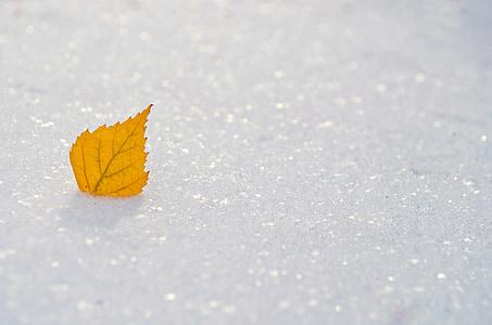 sárga, levél, hó, évszakok, téli, fagyasztott, fehér