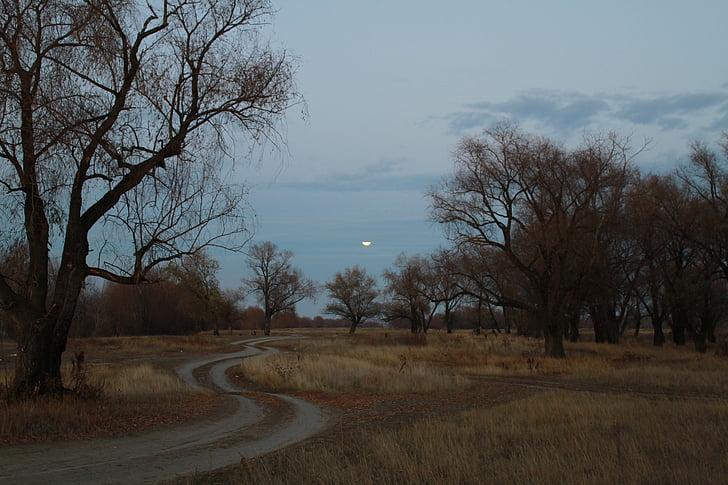 Imagem tag: estrada da floresta à noite, Quantidade de imagem: 28 ...
