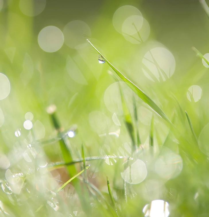 lúka, trávnik, tráva, svieža, listy, Leaf, rastlín