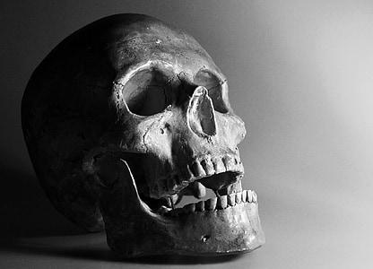 skull, bone, smile, human Skull, halloween, death, spooky