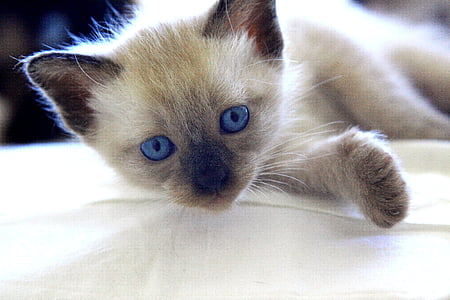 cat, kitten, puppies, baby animal, cute, animal, candy