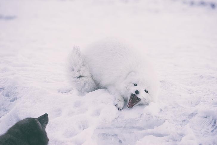 neve, Inverno, Branco, frio, tempo, gelo, árvores