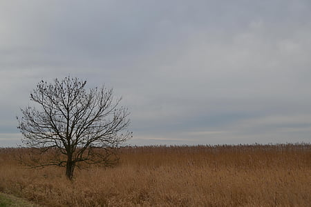 island of usedom, tree, field, landscape, fields