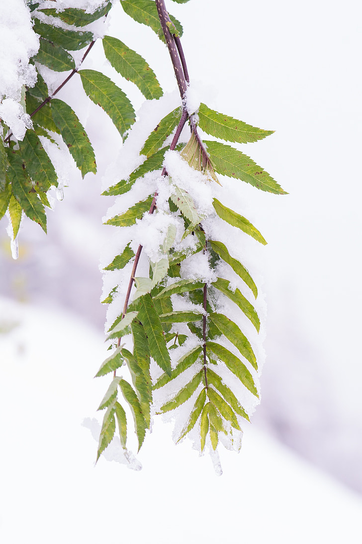 winter, aesthetic, snow, winter time, snowfall, branches, leaves