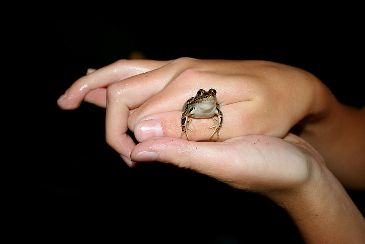 frog, amphibian, hands, small, toad, animal, cute