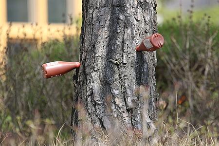 Pi, injecció d'arbre, injeccions de tronc, injeccions de tronc d'arbre, tractament, natura, protecció