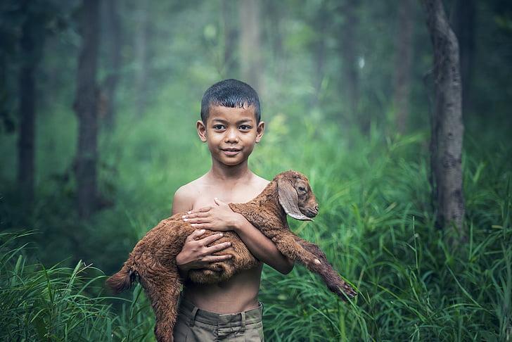 мальчики, Открытый, Таиланд, Детские, Сельское хозяйство, млекопитающее, газон