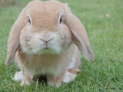pupu, kani, Pääsiäinen, Pet, eläinten, Söpö, ihana