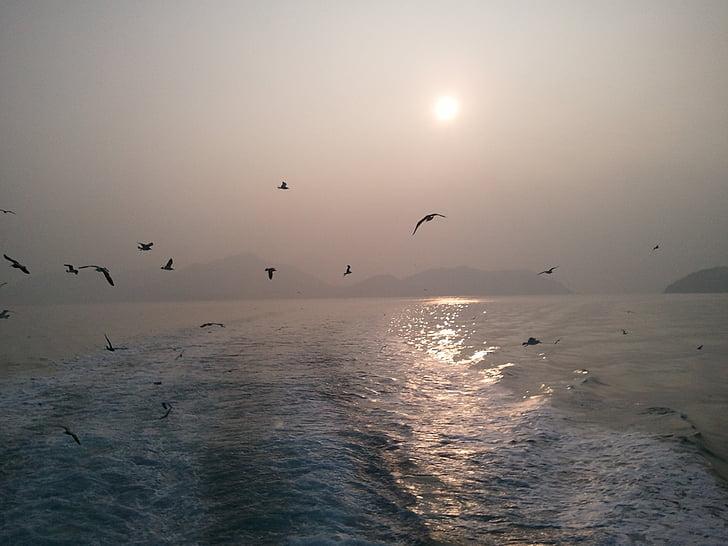 Gavina, vegades, vaixell de plaer, Mar