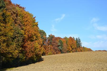 bosc, tardor, tuds, arbres