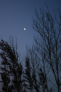 malam, siluet, pohon, bulan, langit, senja, malam