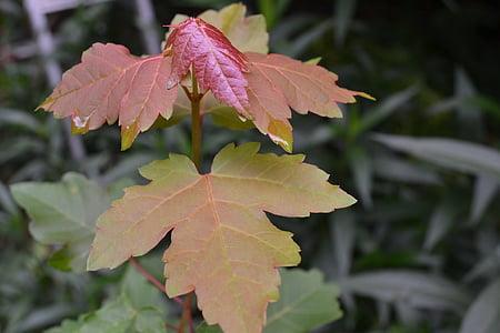 nature, leaves, leaf, foliage, outdoor, green leaf, plant