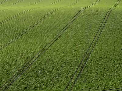 Рюген, поле, орни, зърнени култури, Грийн, природата, зърно