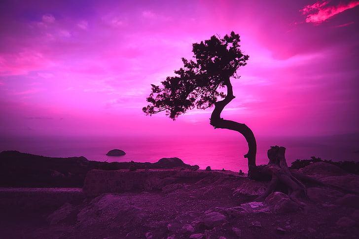 pôr do sol, Crepúsculo, noite, Crepúsculo, céu, nuvens, árvore