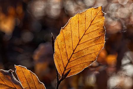 fulles, fulla, fullatge de tardor, tardor, llum de tardor, torna la llum, gel