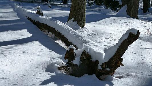 arbre mort, tronc d'arbre, natura, l'hivern, neu, llum i ombra, contrasten