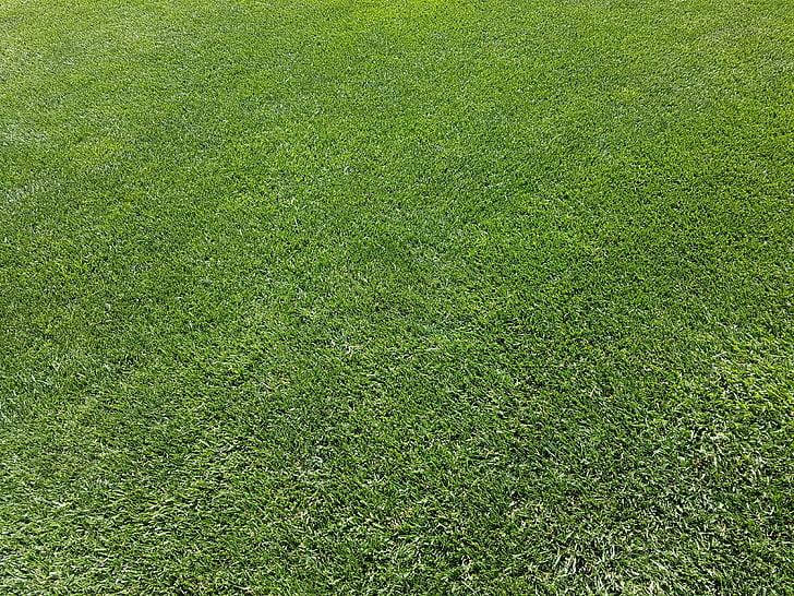 Rush, graminée ornementale, vert, maintenu, parfait, gazon anglais, entretien de la pelouse