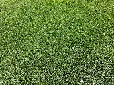 rush, ornamental grass, green, maintained, perfect, english lawn, lawn care