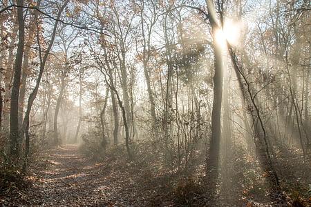 bosc, sol, raig, raig de llum, natura, llum de fons, Sunbeam