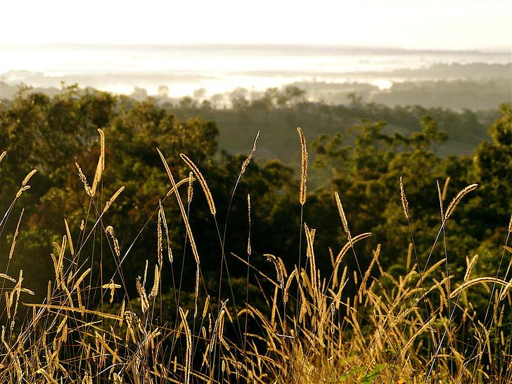 herba, posta de sol, fons de cel, natura, fora, llum, resplendor
