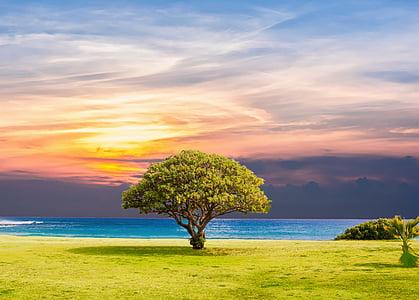treet, sjøen, gresset, natur, hav, Sommer, landskapet