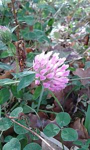 Neliapila, Luonto, kukka, Bloom, ruoho