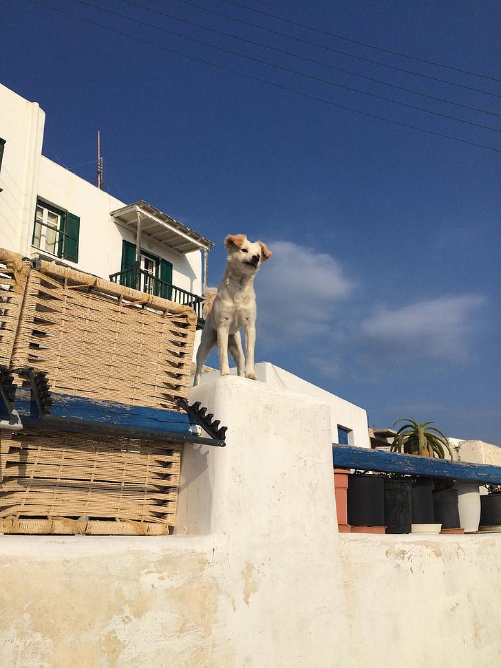 куче, животните, домашен любимец, Гърция, кучешки, кученце, Любов