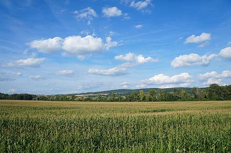 país, Eslovàquia, camp, natura, l'estiu, el cel, cel