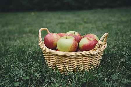 애플, 사과, 사과 따기, 바구니, 과일, 건강 한, 자연