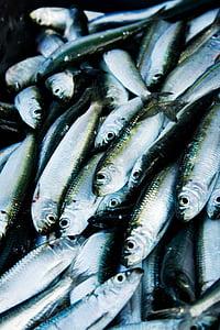 arengada, peix, Portuària, pesca, Mar, Llac, embarcacions de pesca