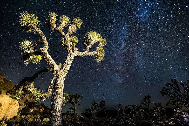 Joshua, arbre, mikly, façon, étoiles, désert, Joshua tree