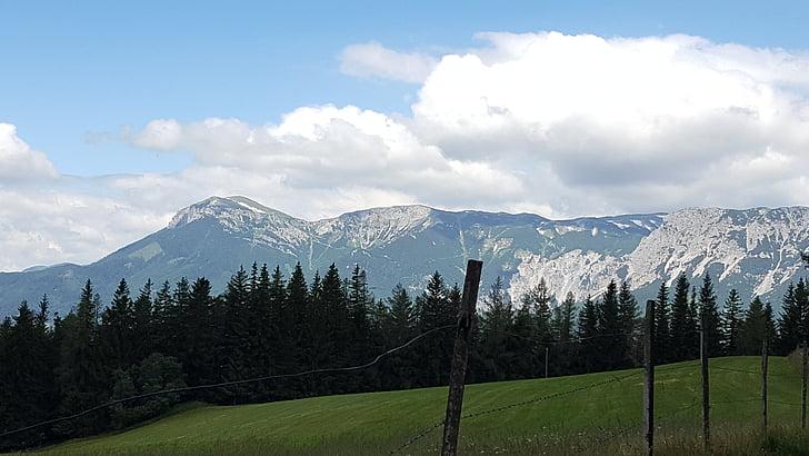 muntanya, Prat, Alm, paisatge alpí, Prat de muntanya, alpí