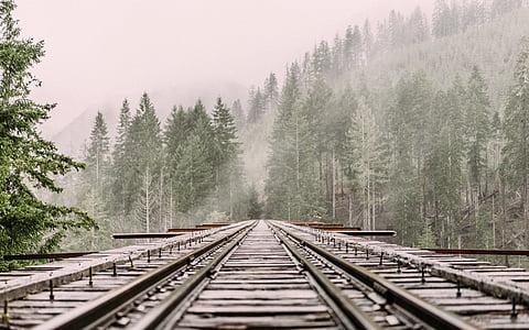 railway, railroad tracks, train tracks, pine trees, cold, alpine, mist