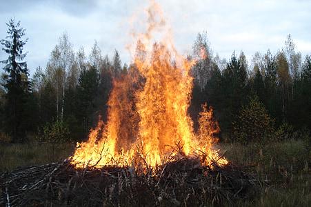 vida silvestre, flama, Koster