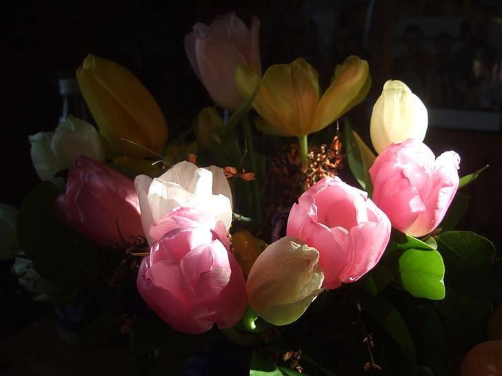 tulpes, pušķis, Strauss, Pavasaris, sarkana, rozā, sarkanīgi