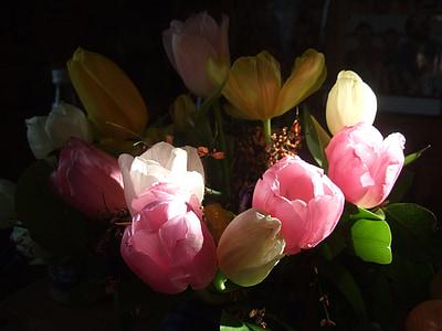 Tulipani, bouquet, Strauss, primavera, rosso, rosa, rossastro