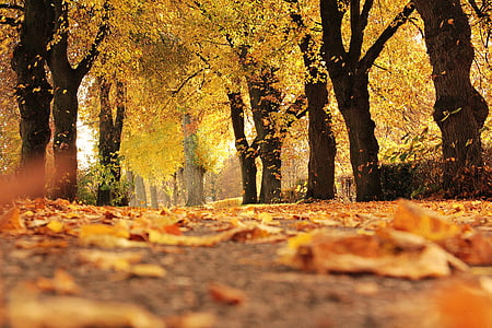 trees, avenue, autumn, away, mood, outdoor, fall leaves