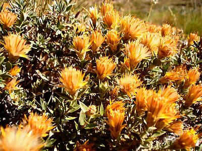 flowers, wild, spring, plants, wild flora, wild flowers, flower