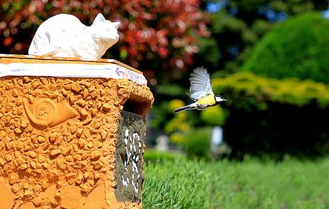 синигер, птица, лети, полет, емисия, хранене, животни