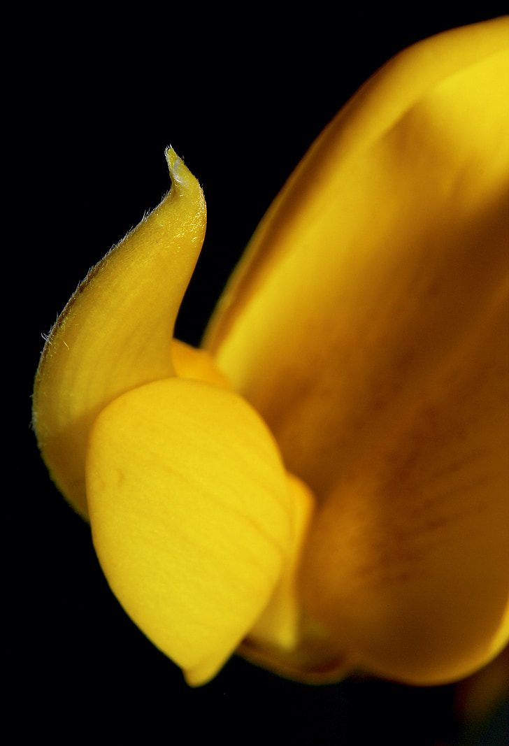flor, bodegons, flora, flor