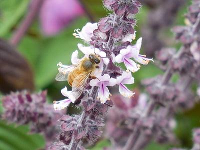 abella de la mel, abella, mel, natura, insecte, groc, dolç