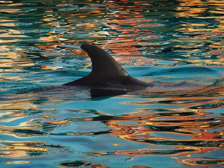 Дельфин, плавник, Природа, Голубой, воды, мне?, животное