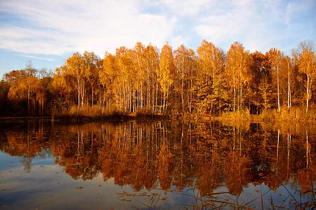 Natura, drzewo jesień, Jesienny nastrój, brązowy, Słońce, drzewa, krajobraz
