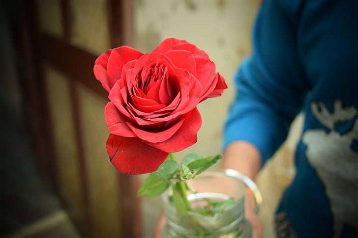rose, love, red, valentine, romance