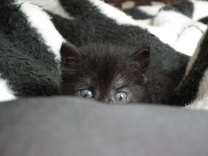 kitten, little, cat, pets, animals, cat eyes, cat's eye