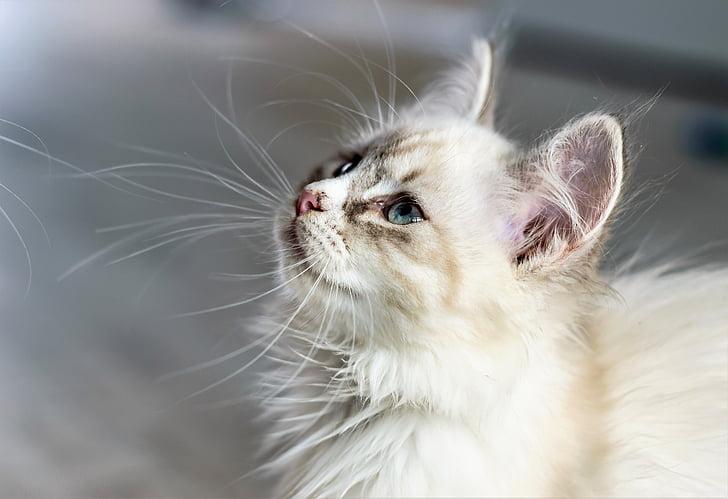 mlada crvenokosa maca velike sise i vjeverice