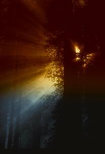 Kalifornien, Sonne, Strahlen, Licht, Sonnenlicht, Wald, Bäume