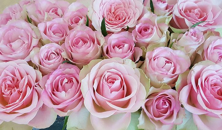 rožės, rožinė, rožės žydi, gėlės, žiedų, žydėti, rožinė rožė