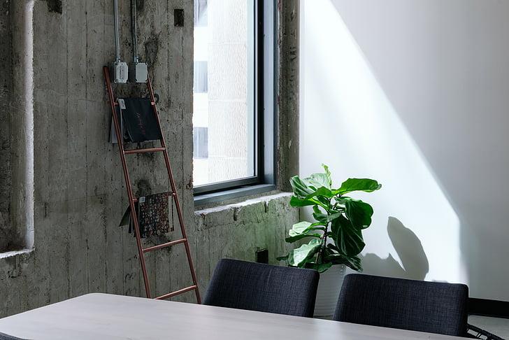 tabel, stoel, venster, glas, zonlicht, groen, plant